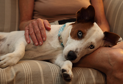 PALS – Pet care assistance for the Disabled